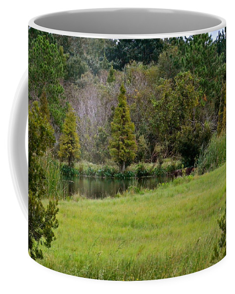 Landscape Coffee Mug featuring the photograph The Beginning Of Fall In Florida by Carol Bradley