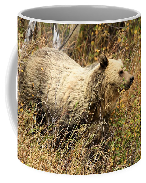 Grizzly Bear Coffee Mug featuring the photograph The Berry Hunter by Adam Jewell