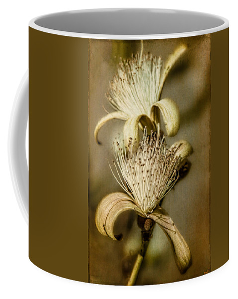 Plant Coffee Mug featuring the photograph The Botany Specimen by Chris Lord