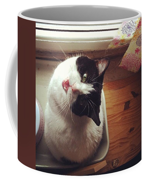 Catsofinstagram Coffee Mug featuring the photograph the Bowl's Empty! #cat by Katie Cupcakes