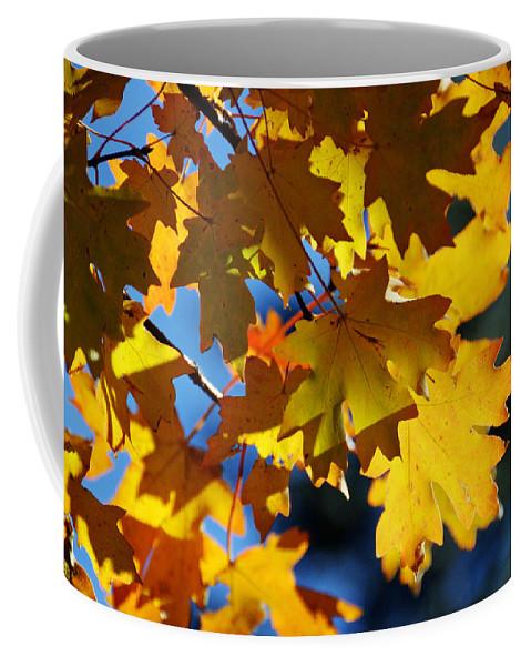 Autumn Coffee Mug featuring the photograph The Colors Of Autumn In Arizona by Saija Lehtonen