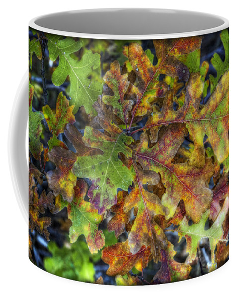 Autumn Coffee Mug featuring the photograph The Colors Of Autumn by Saija Lehtonen