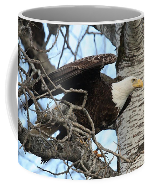 Bald Eagle Coffee Mug featuring the photograph The Descending Queen by Teresa McGill