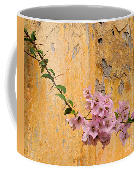Bougainvillea Coffee Mug featuring the photograph The Escaping Bougainvillea by Vivian Christopher