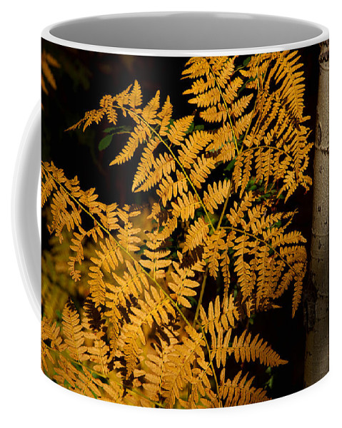 Gold Fern Canvas Print Coffee Mug featuring the photograph The Golden Fern by Jim Garrison