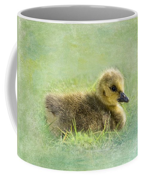 Canada Goose Coffee Mug featuring the photograph The Gosling by Betty LaRue