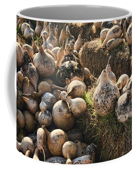 Gourds Coffee Mug featuring the photograph The Gourd Family by Kathy Clark