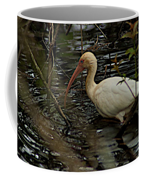 Audobon Corkscrew Swamp Sanctuary Coffee Mug featuring the photograph The Hunt by Joseph Yarbrough