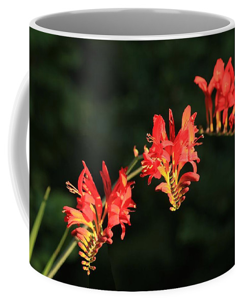 Flower Coffee Mug featuring the photograph The Hydra by Winston Rockwell