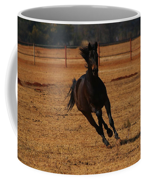 Horse Coffee Mug featuring the photograph The Joy Of Life by Tracey Beer