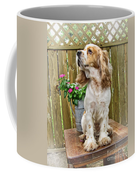 Animals Coffee Mug featuring the photograph The Model by Debbie Portwood
