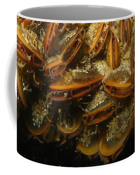 Mussels Coffee Mug featuring the photograph The Mussel Group by Paul Ward