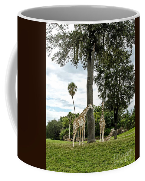 Giraffe Coffee Mug featuring the photograph The Outfield by Carol Bradley