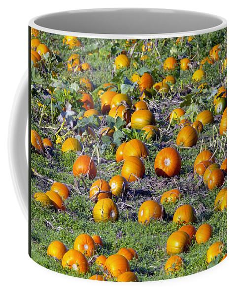 Pumpkin Coffee Mug featuring the photograph The Pumpkin Patch by Sharon Talson