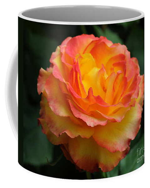 Rose Coffee Mug featuring the photograph The Rose 2 by Vivian Christopher