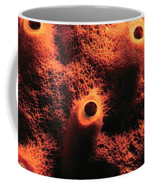 Sponge Coffee Mug featuring the photograph The Sponge by Mike Nellums