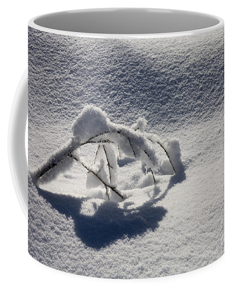 Sapling Coffee Mug featuring the photograph The Weight of Winter by Mike Dawson