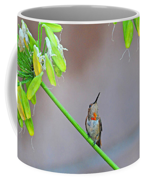 Hummingbirds Coffee Mug featuring the photograph Things Are Looking Up by Lynn Bauer
