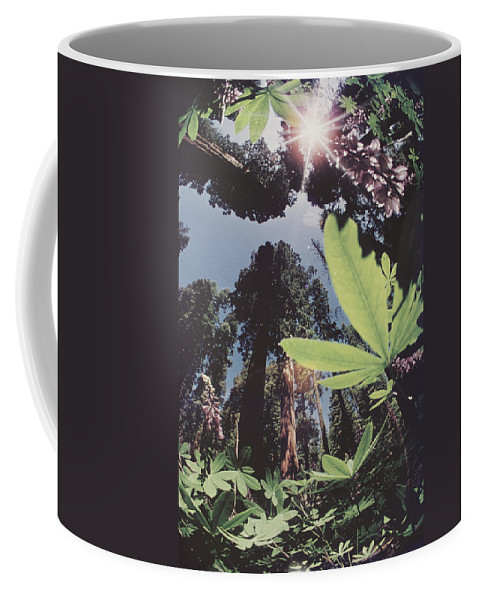 sequoia National Park Coffee Mug featuring the photograph This Shot Is An Enlargement Of 55f13 by B. Anthony Stewart