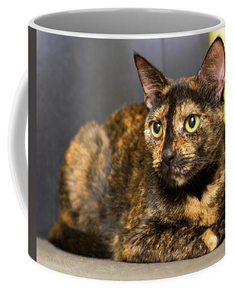 Cat Coffee Mug featuring the photograph Thorette by Julie Niemela