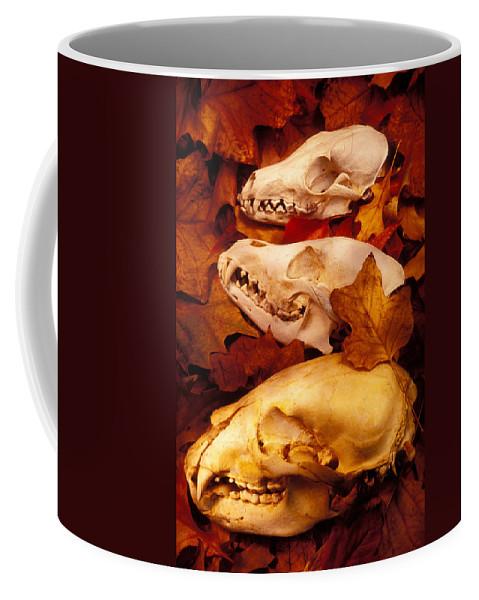 Three Animal Skulls Coffee Mug featuring the glass art Three Animal Skulls by Garry Gay