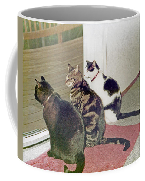 Nature Coffee Mug featuring the photograph Three Cats Looking Out Into The Forest by Carl Deaville