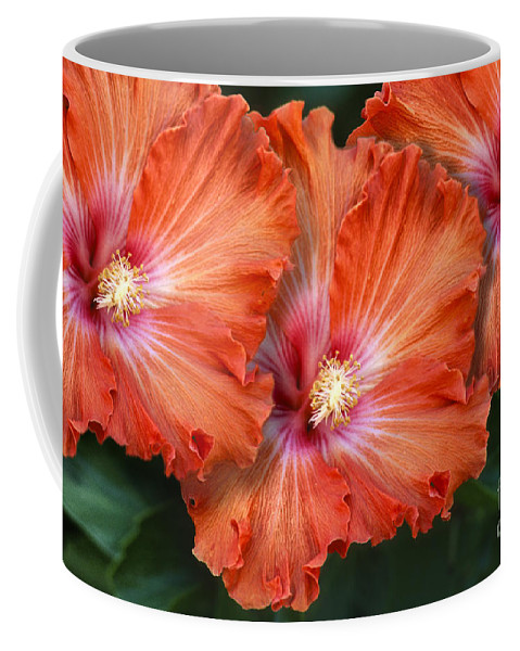 Floral Coffee Mug featuring the photograph Three Of A Kind by Sandra Bronstein
