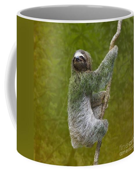 Sloth Coffee Mug featuring the photograph Three-toed Sloth Climbing by Heiko Koehrer-Wagner