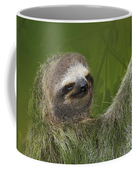 Sloth Coffee Mug featuring the photograph Three-toed Sloth by Heiko Koehrer-Wagner