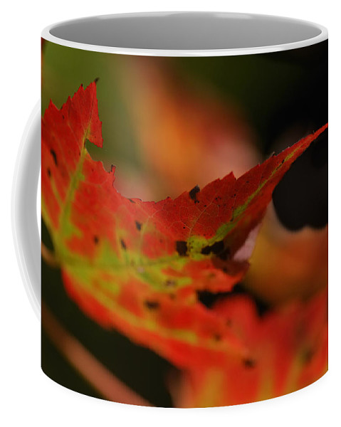 Leaf Coffee Mug featuring the photograph Time For A Change by Susan Capuano