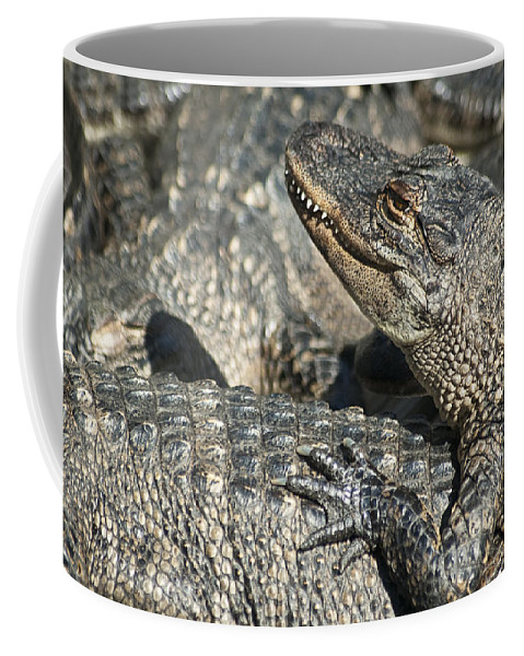 Alligator Coffee Mug featuring the photograph Time For A Manicure by Carolyn Marshall