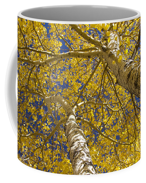 Aspens Coffee Mug featuring the photograph Towering Autumn Aspens With Deep Blue Sky by James BO Insogna