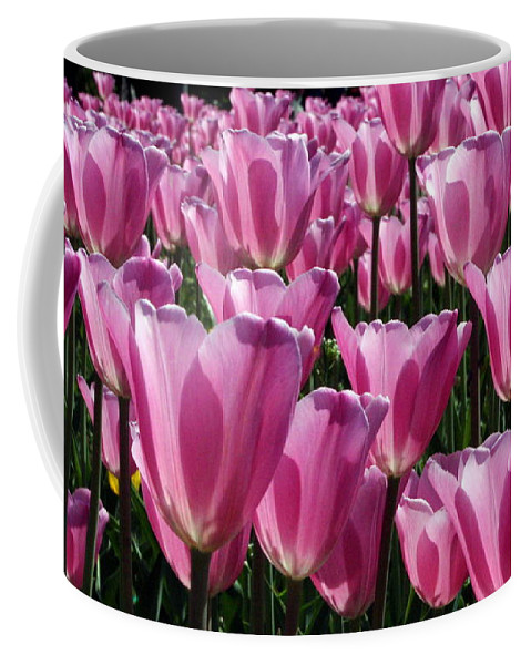 Tulips Coffee Mug featuring the photograph A Field Of Translucent Tulips by Laurel Talabere
