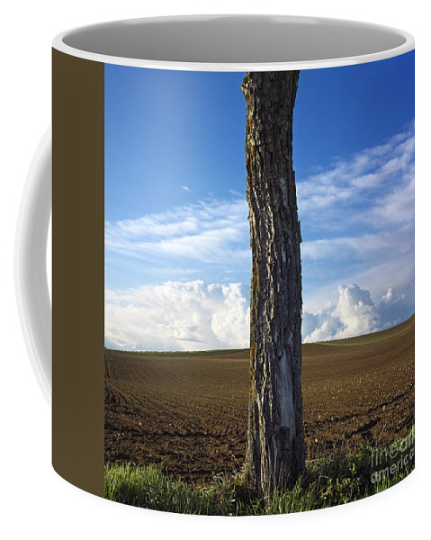 Agricultural Landscape Coffee Mug featuring the photograph Tree Trunk by Bernard Jaubert
