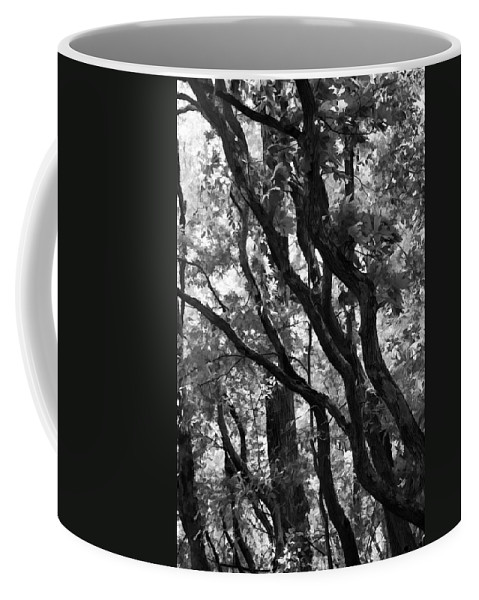 Trees Coffee Mug featuring the photograph Trees Beautiful Trees by Kathy Clark