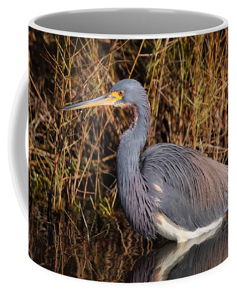 Birds Coffee Mug featuring the photograph Tricolored Heron by Bruce J Robinson