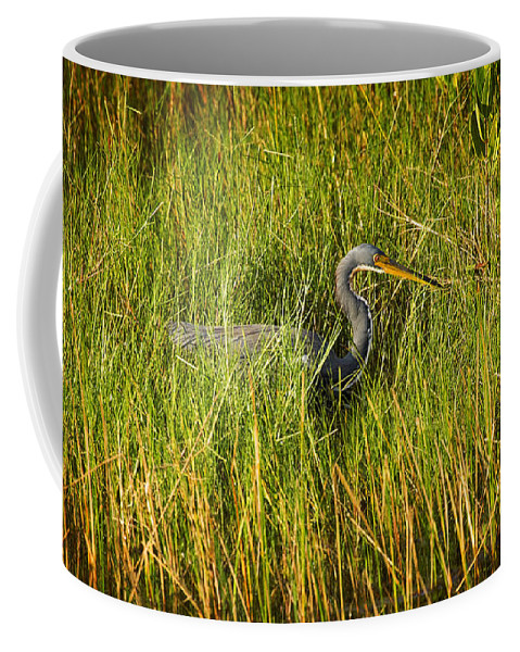 Tricolored Heron Coffee Mug featuring the photograph Tricolored Heron by Rich Franco