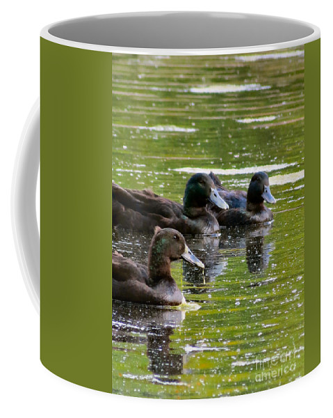 Duck Coffee Mug featuring the photograph Trio by Art Dingo
