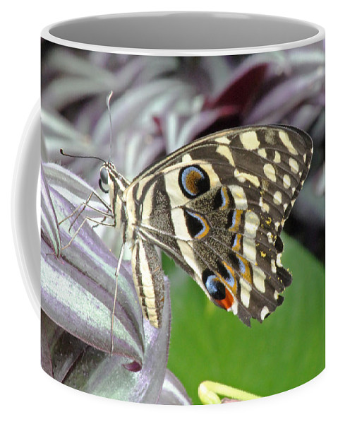 Butterfly Coffee Mug featuring the photograph Tropical Butterfly by Tony Murtagh