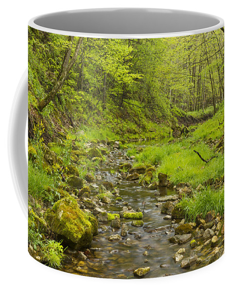 Trout Coffee Mug featuring the photograph Trout Run Creek 3 by John Brueske