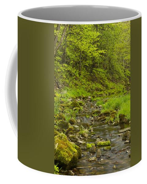 Trout Coffee Mug featuring the photograph Trout Run Creek 4 by John Brueske