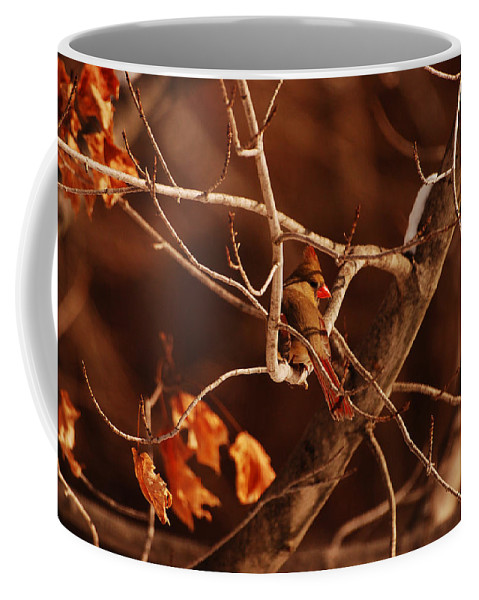 Cardinal Coffee Mug featuring the photograph Trying To Blend In by Lori Tambakis