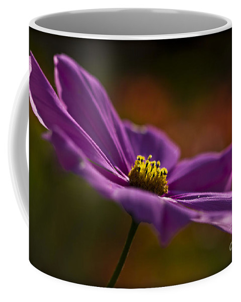 Cosmos Coffee Mug featuring the photograph Turn Your Face To The Sun by Clare Bambers