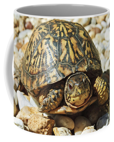 Common Coffee Mug featuring the photograph Turtle With Red Eyes On Rocks by Susan Leggett