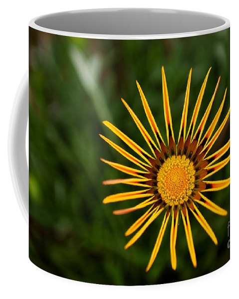 Flower Coffee Mug featuring the photograph Twinkle Twinkle by Syed Aqueel