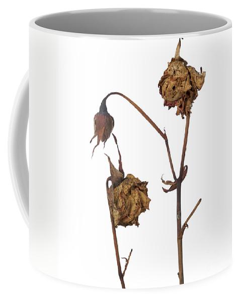 Close-up Coffee Mug featuring the photograph Two Roses by Bernard Jaubert
