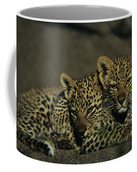 Photographs Coffee Mug featuring the photograph Two Sleepy Four-month-old Leopard Cubs by Kim Wolhuter