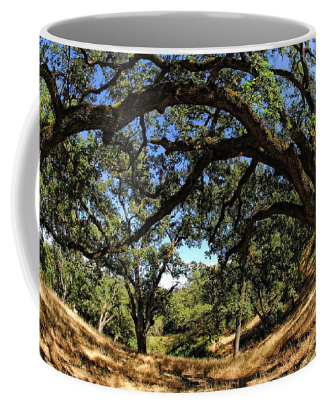 California Coffee Mug featuring the photograph Under The Oak Canopy by Donna Blackhall