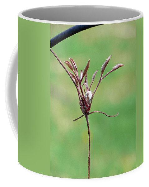 Clematis Coffee Mug featuring the photograph Unrealized Beauty by Pamela Patch
