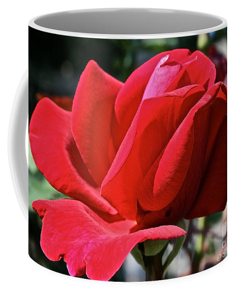 Outdoors Coffee Mug featuring the photograph Unrolling The Red Carpet by Susan Herber